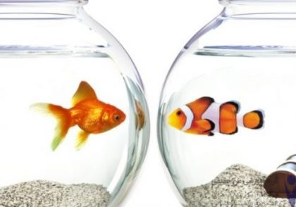 مقایسه درون خود و برون دیگران